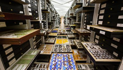 How Museum Collections Advance Knowledge of Human Health