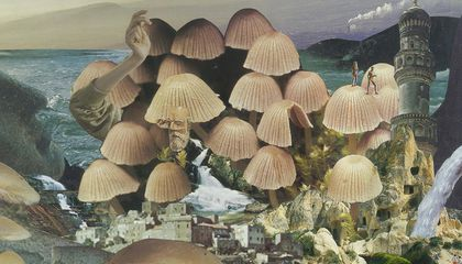 Get a Taste for Mushroom Art at This New, Fungus-Forward Exhibition