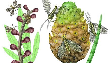 Image: Insects interacting with plants play mighty roles on Earth for millennia