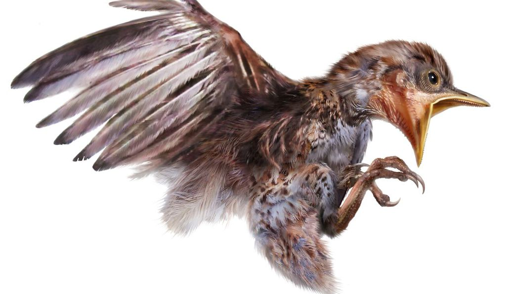 Researchers find bird remains fossilized in 99-million-year-old amber