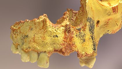 Homo antecessor: Common Ancestor of Humans and Neanderthals?