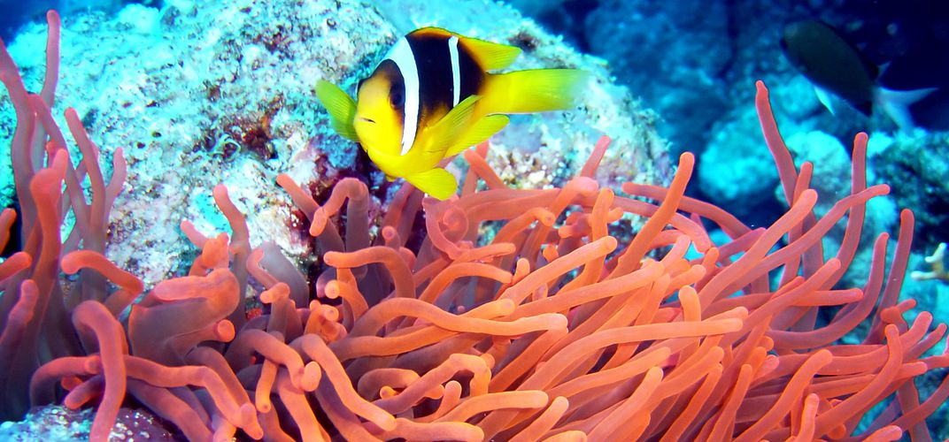 Tropical fish and coral of the Great Barrier Reef