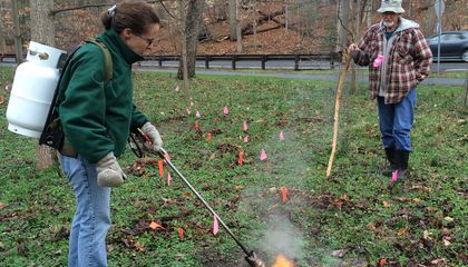 A New Weapon in the War on Weeds: Flamethrowers
