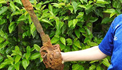 Using a Metal Detector, 10-Year-Old Boy Finds Centuries-Old Sword in Northern Ireland
