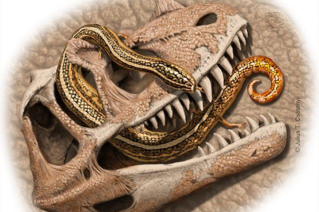 599aa6c6d5e8 Other discoveries in the area include Fruitadens – a dinosaur with  tusk-like teeth and one of the smallest ever found – named in 2010