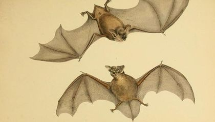16 Million Years Ago This Giant Bat Walked the Jungles of New Zealand