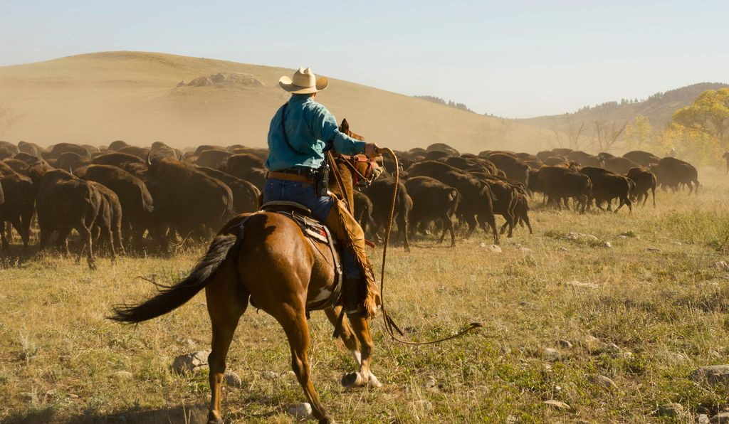 South Dakota S Buffalo Roundup Is Pure Americana Spectacle Travel Smithsonian
