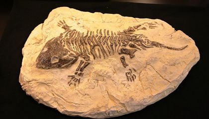 If You Found a Fossil on the Ground, What Would You Do?