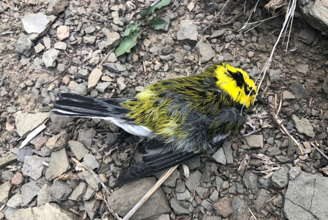 Thousands of Migrating Birds Drop Dead Across Southwestern U.S. | Smart  News | Smithsonian Magazine