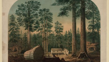 How California's Giant Sequoias Tell the Story of Americans' Conflicted Relationship With Nature