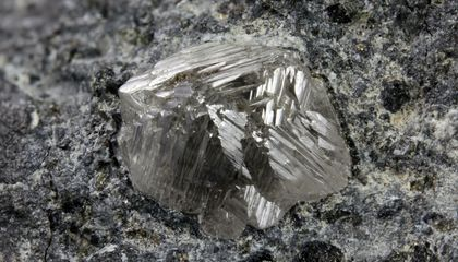 This African Plant Leads the Way to Diamond Deposits