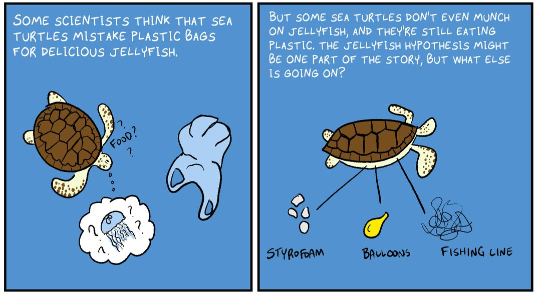 "P2: ""Some scientists think that sea turtles mistake plastic bags for delicious jellyfish."" P3: ""But some sea turtles don't even munch on jellyfish, and they're still eating plastic. What else is going on?"""