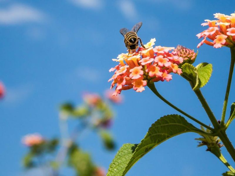How Flowers Manipulate Light To Send Secret Signals To Bees