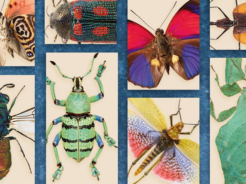 The World's Most Interesting Insects | Science | Smithsonian Magazine