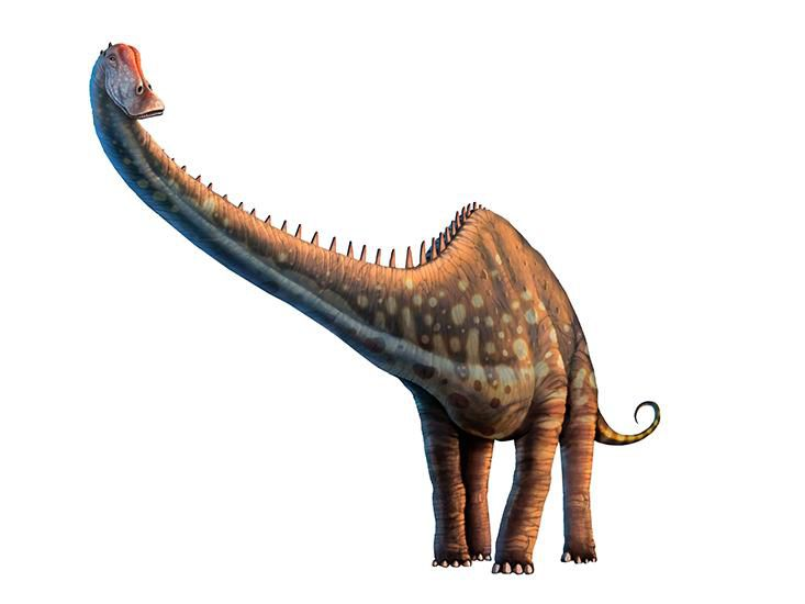 To Estimate The Size Of Dinosaur Including Those From Tyrannosaurus Rex Shown Scientists Measured Many Living Creatures