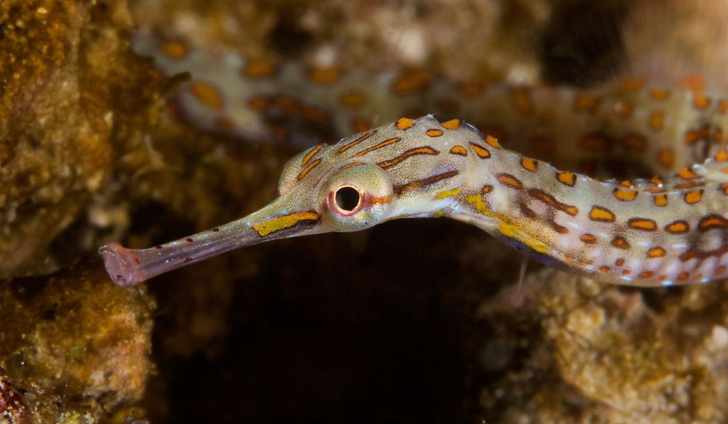 The male pipefish appears to have a great deal of control over the resources the eggs in his brood pouch receive.