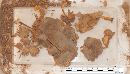 This 1,500-Year-Old Chunk of Fossilized Human Poop Contains