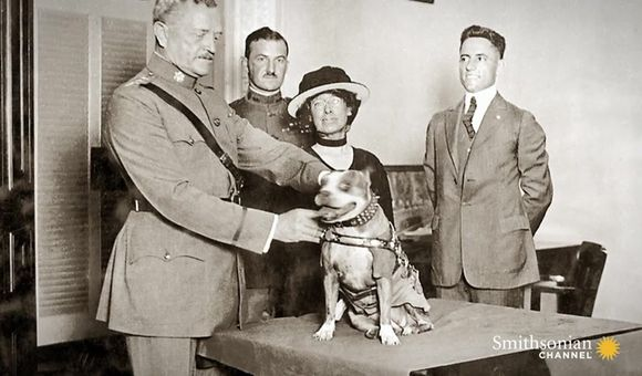 Preview thumbnail for video'Archival Footage of Parachuting Military Dogs
