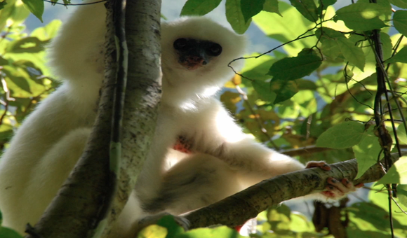Preview thumbnail for video'Lemur Biology in the Axis of Evil: A Schistosomiasis Love Story in 10 Easy Lessons