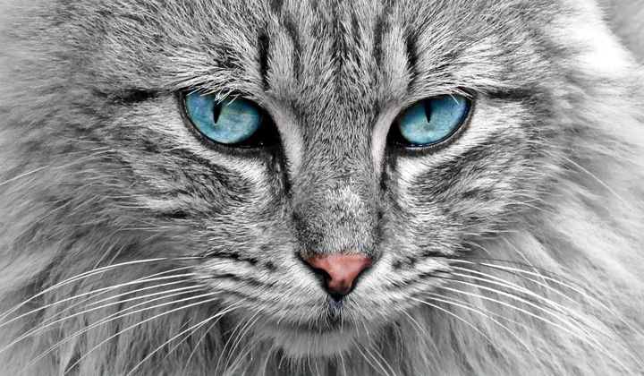 Human Genomes Are Surprisingly Cat-Like
