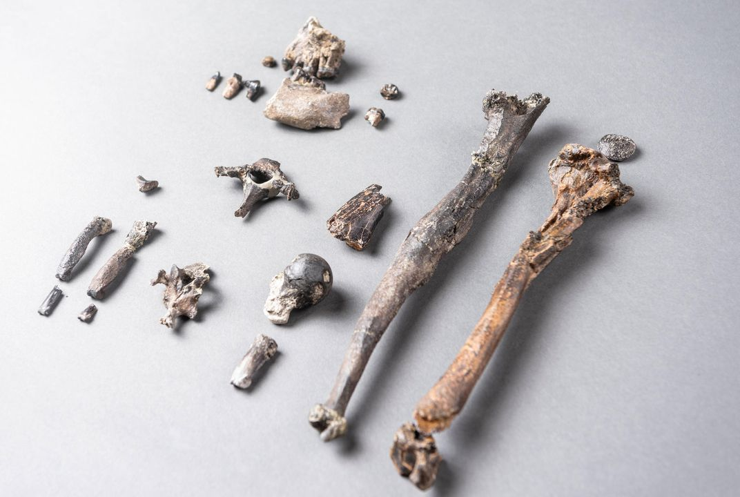 New Ancient Ape Species Rewrites the Story of Bipedalism